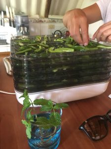 Dehydrating peppers with Hosanna